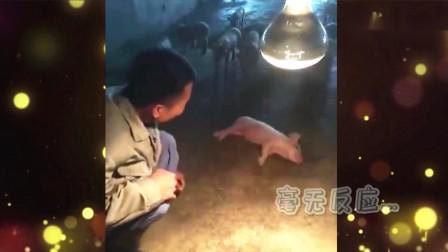 永远也不要试图去叫醒一只猪,因为你叫不醒的 家庭幽默录像 2019 20191007 快剪  1008165332