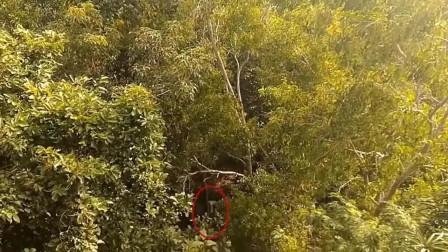 男子在树林中拍下疑似外星人画面,真的有外星人存在吗?
