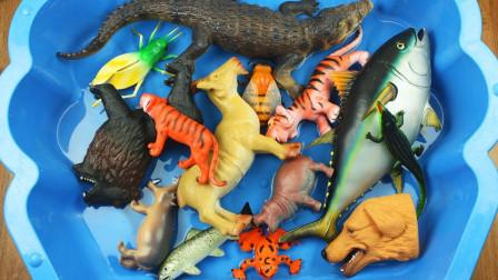 好可爱!一起看看动画版的动物是什么样的吧?趣味玩具故事