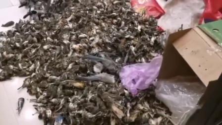 冷鲜店被查出7000余只野生动物死尸 鸟尸堆积如山