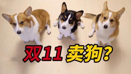 双十一在即,想买的东西太多,铲屎官居然要让家里的狗来买单?