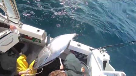 外国小伙赶海钓鱼,喜提一条将近300斤的金枪鱼王,这回发财了!