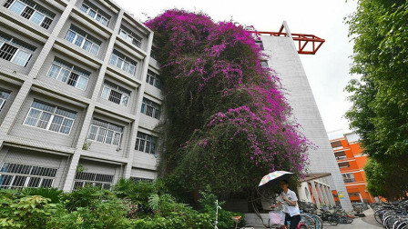 """广西大学现巨型鲜花瀑布:自楼顶""""飞流直下""""三十多米"""