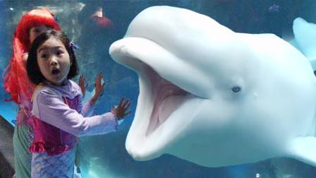 哇塞!萌宝小萝莉在海洋公园里遇见了超可爱的白鲸!趣味玩具故事
