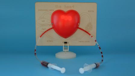 爱智慧 心脏演示器 STEM科学实验室  DIY电路模拟心脏 科技小制作 科学玩具 手工课材料 邢老师模型
