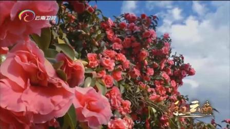 """""""花""""在云南有着它独特的含义,少数民族中,它通常被作为形容词"""