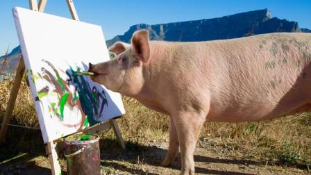 """这是一头会画画的猪,一幅画高达上万元,被誉为""""猪加索"""""""