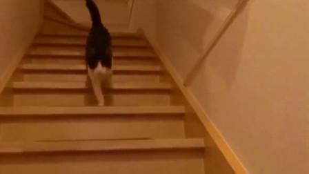 猫咪们迎接铲屎官回家,一路的喵喵喵声,都是什么小天使啊!