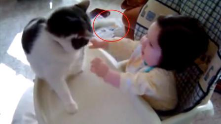 宝宝想和猫咪玩,猫咪却反手一个十八连拍!一旁的老爸都看不下去了