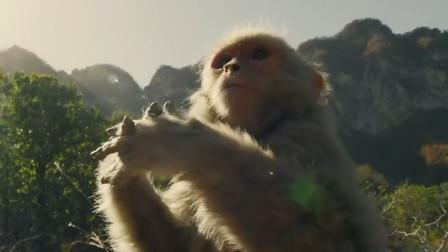 诛仙1:肖战想扔掉嗜血珠,结果被猴子扔石头,这段太搞笑了!