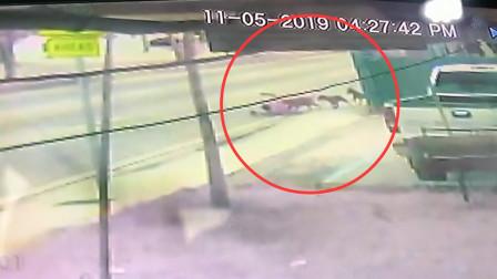 男子街头遭5条狗扑倒撕咬 路人挥舞木棍将其救下