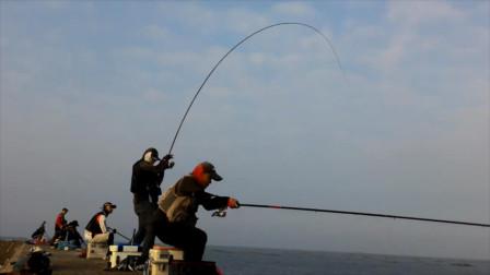 钓友扬竿中鱼,鱼竿瞬间大凹,漂亮的鹦哥鱼到手