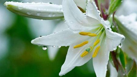 十二星座代表的小花仙,天秤是百合花,而天蝎座最美丽