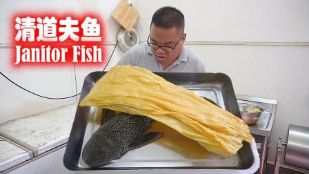 今天不吃河豚,吃清道夫鱼,网友:肥仔的胃好强大