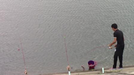 钓鱼:这地方鱼太多了下竿就猛咬钩,过瘾