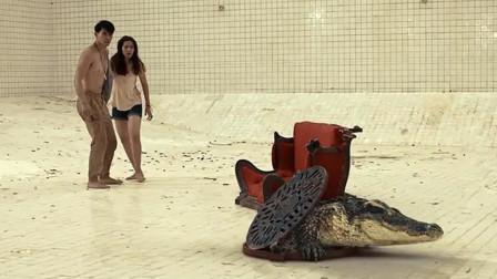 情侣被困6米深泳池,更加绝望的是,还有一条鳄鱼掉了进来!