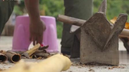 老广人用古法提炼肉桂油,耗时耗力,一百斤原料只能浓缩出七八两