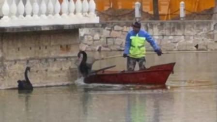 大爷划船去救也被困:哈师大校园湖面结冰冻住天鹅