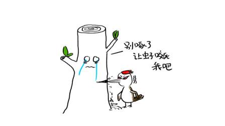 轻知识科普 | 啄木鸟为什么不会脑震荡
