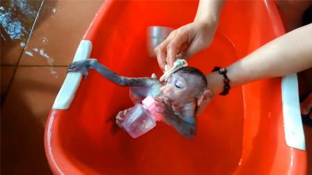 洗澡都要抱着奶瓶的小猴子,一脸不情愿:我一点都不脏