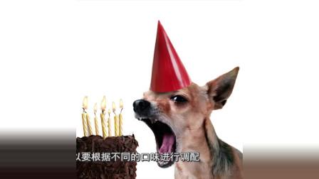 长沙妹子很爱狗,开狗店想奇招,做蛋糕请狗过生日