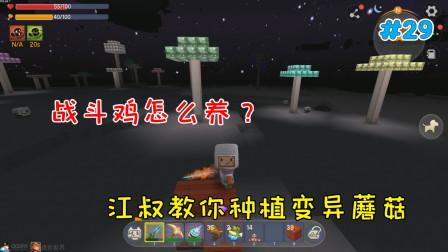迷你世界幼稚园29:战斗鸡怎么养?江叔教你种植变异蘑菇