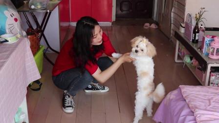 小姐姐把流浪狗捡回家后,喂狗狗吃的,还取了好听的名字!