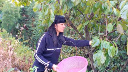 这样摘水果才过瘾!农村老家一年四季都有各种水果,吃不完!