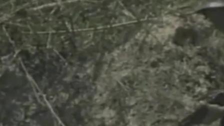 中越战争精彩战斗场面:我方女兵不幸被越军包围,关键时刻战友赶到