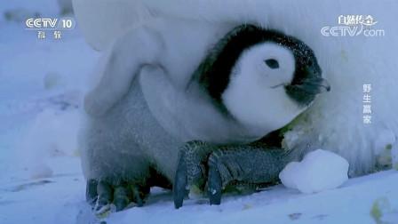 墨西哥金刚鹦鹉成为濒危物种,保护中心每只新生雏鸟,都有一位专业人士照顾