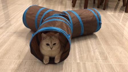 这么可爱的猫咪,一定会被吸的!