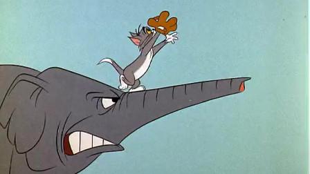 猫和老鼠:汤姆你敢给大象撒辣椒面  大象说你给我等着
