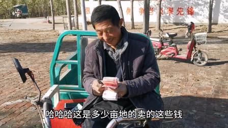 山东小麦又涨价了,现在涨到多少钱一斤,农村大叔告诉你最新价格