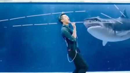 分手大师:小伙放血戏弄鲨鱼,结果把自己给坑了