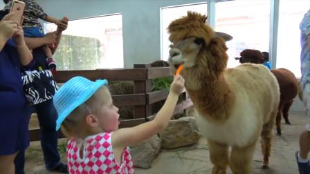 萌娃小萝莉来到了动物园喂小马吃胡萝卜好可爱啊,她可开心啦!