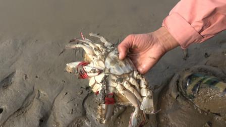 大梅赶海随便捡了一只1斤多梭子蟹,带回家一蒸,膏多肉肥吃爽了