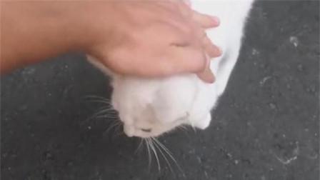 超粘人的流浪猫,让陌生人摸得超开心!