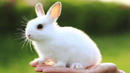 宠物兔子不吃磨牙棒,小姐姐最后用什么方法让它乖乖听话?