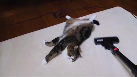 猫咪能知道自己的铲屎官在做什么吗?