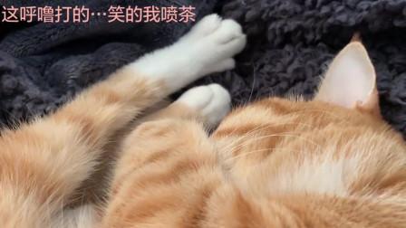 睡觉的橘猫打呼噜,这呼噜有点凶狠啊哈哈