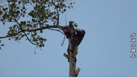 农村大哥伐树方法独特,一个人杀掉整棵树,在场所有人都捏把汗