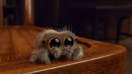 最萌小蜘蛛二周年了,感受一下这些年小奶音的变化吧