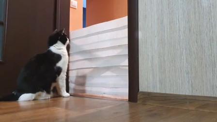 猫咪挑战卷纸墙,面对越来越高的困难,也是开始任性了