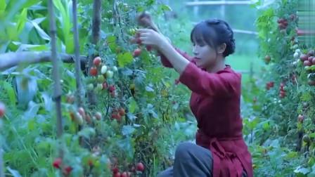 老外看中国:YouTube看李子柒:一锅暖胃汤,散发出浓郁的番茄牛腩味,美味