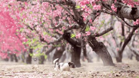 跟随《影响世界的中国植物》去透视自然的辽阔、植物的壮美还有创作者的努力-植物纪录片花絮