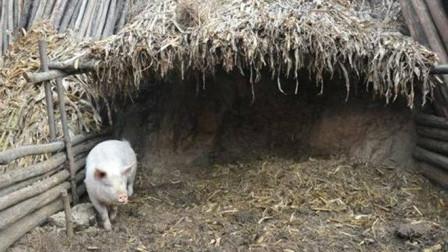 """黑龙江农民砌猪圈,意外挖出一条""""龙"""",上交国家成镇馆之宝!"""