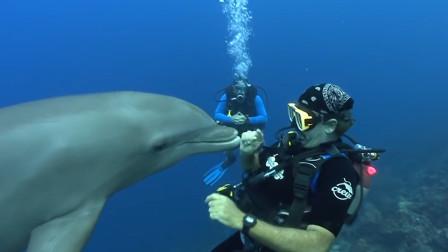海豚的脑袋竟然是软的,摸上去如同软沙发,颠覆以往的认知