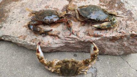 赶海还是晚上收获多,螃蟹能捡半桶,赶海的人也很多