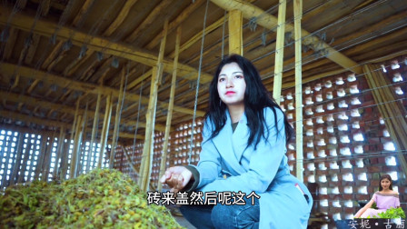 古丽走新疆 新疆农村葡萄干晾好了!维吾尔古丽收了一整仓!