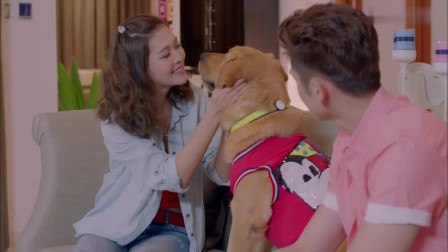 神犬小七:诺诺竟然向欧叶求婚了,这让旁边的鲍宇尴尬了